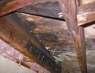 mold and rot in a Niagara Falls crawl space
