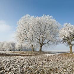 Frost covering trees and a grassy field in Lake View