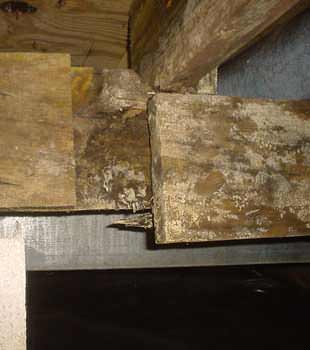 Extensive basement rot found in Lockport by Frank's Basement Systems
