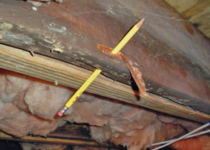 Destroyed crawl space structural wood in Eden