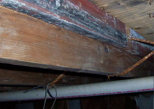 Rotting, decaying wood from mold damage in Youngstown